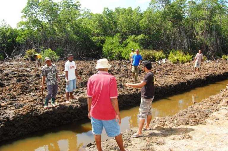 Waicoka Village Mangroves 029