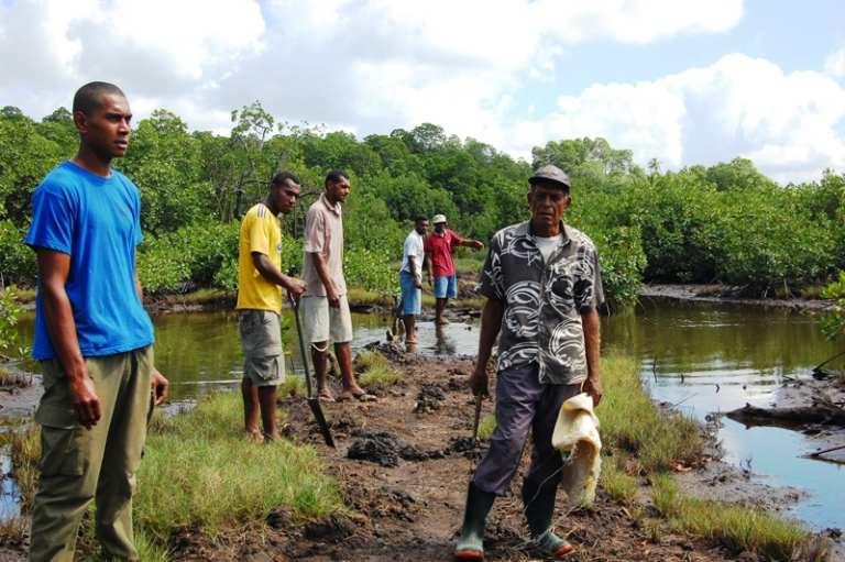 Waicoka Village Mangroves 142