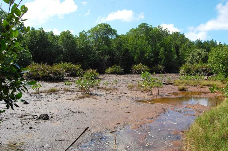 Waicoka Village Mangroves 157