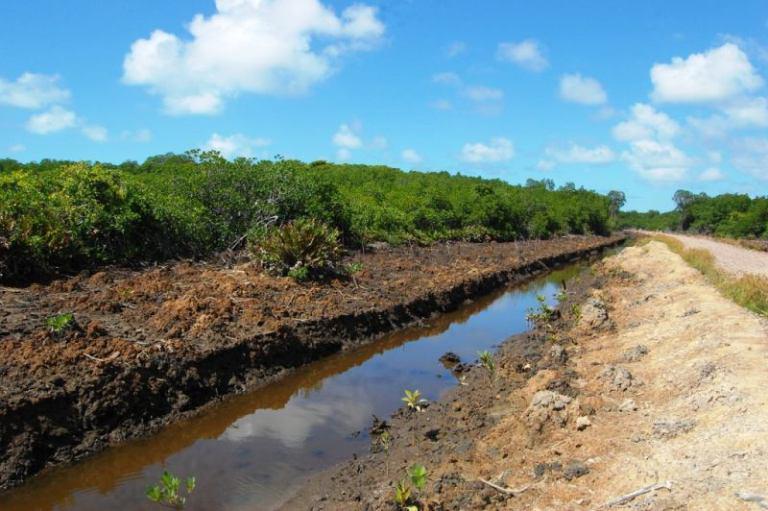 Waicoka Village Mangroves 195
