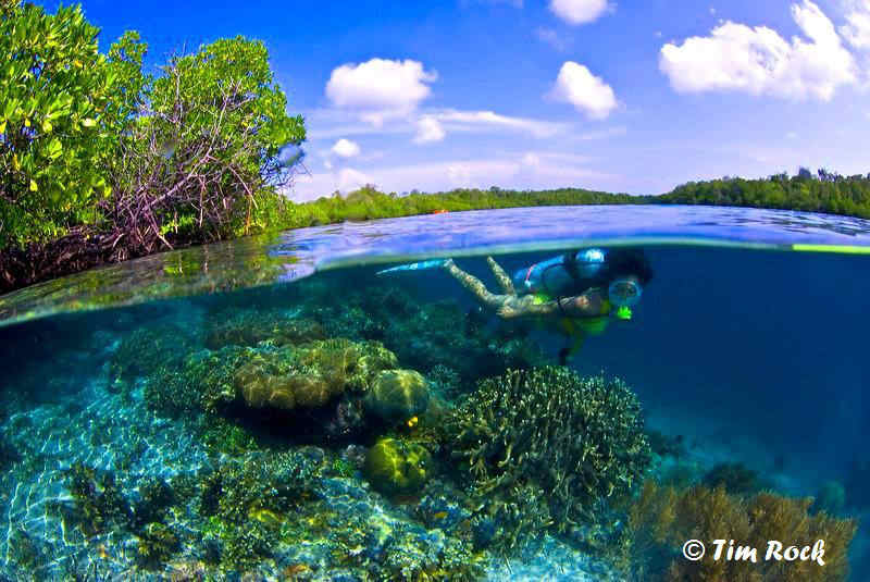 tim rock western papua mangroves